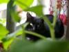 cat-12