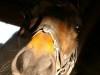 horse-11