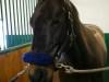 horse-6