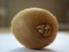 Kiwifruit-11