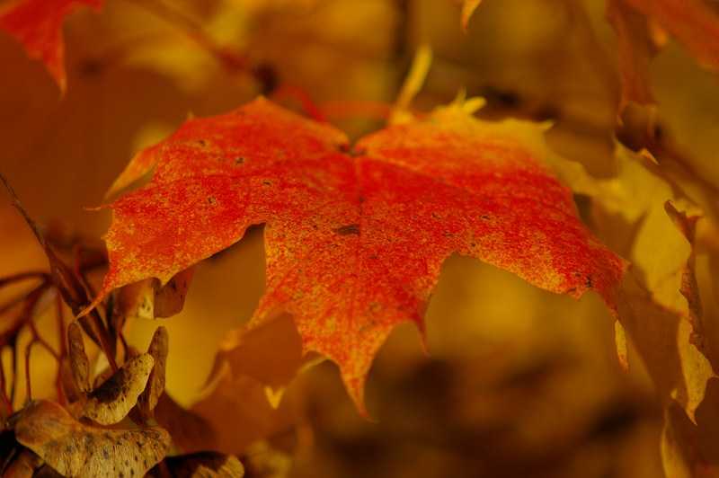 leaf.october.2012